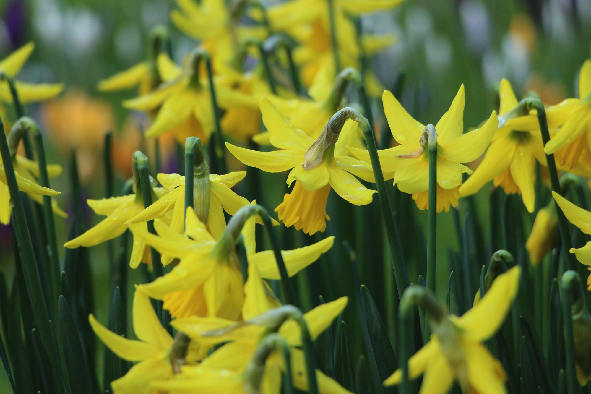 Spring Retreat - The Garsdale Retreat