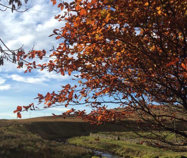 Tree - The Garsdale Retreat