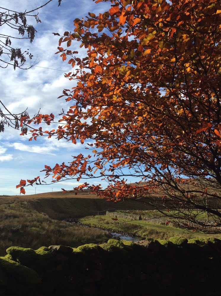 Tree - The Garsdale Retreat